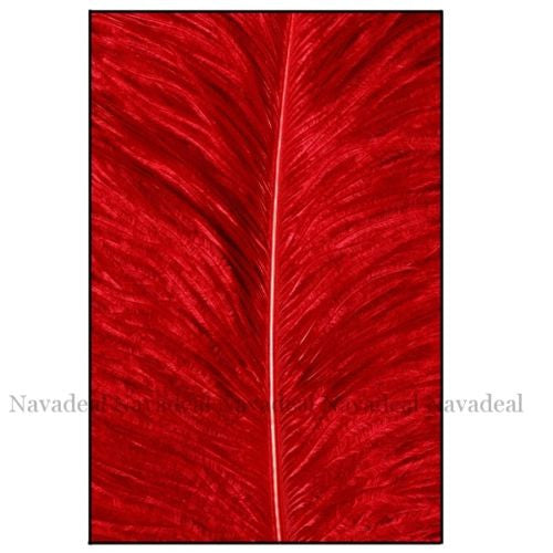Modern Art Fantasy Wild Red Feather Decorative Painting Canvas Poster Picture
