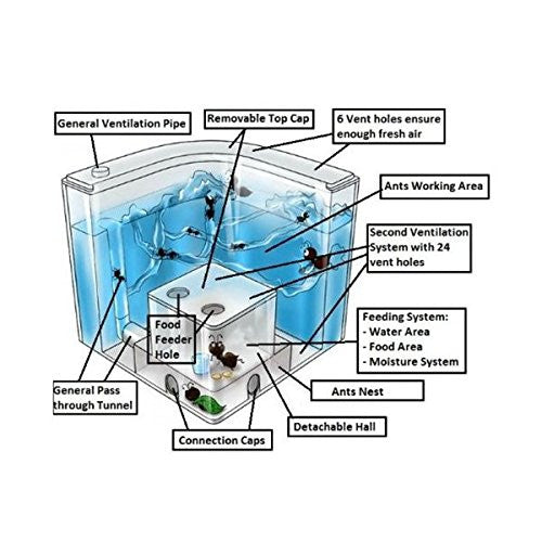 NAVAdeal Ant Castle Experiment and Toy Allows Study of Ant Farm's Social Structure, Architecture, Ecosystem, and The Behavior of Ants within The 3D Maze of Translucent Gel