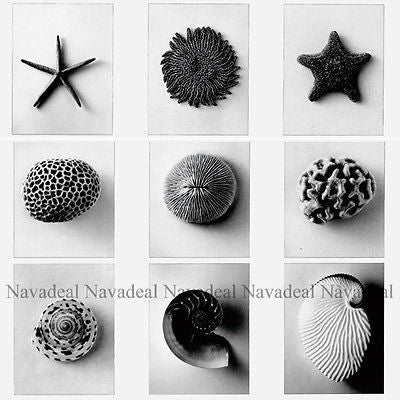 Sea Ocean Creatures Starfish Coral Shell Art Decor Canvas Wall Poster Picture