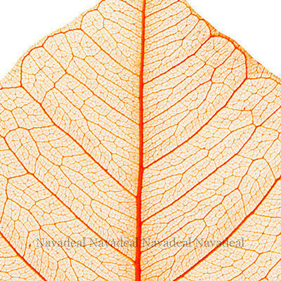 Vintage Orange Wood Tree Plant Leaf Art Decorative Canvas Wall Poster Picture