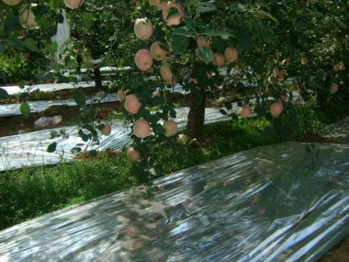 "Hydroponic Plant Garden Wall Mylar Film Covering Sheet Highly Reflective 82""x47"""