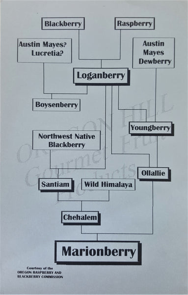 What is a Marionberry?