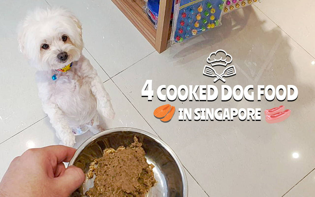 Some of the Best Raw Dog Food Brands  to Try in Singapore!