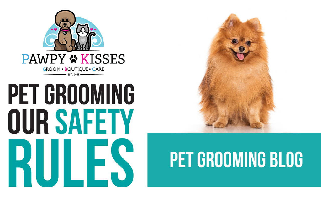 Pet Grooming Services Resume in Post Circuit Breaker Phase 1