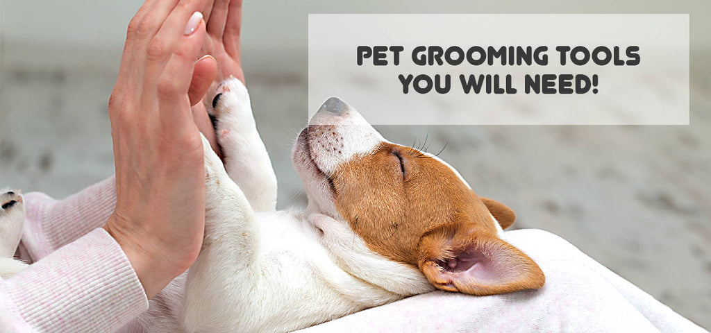 5 Pet Grooming Tools, Accessories or Equipment you will need!