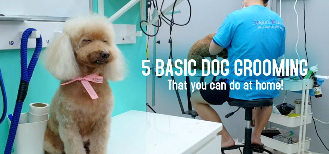 5 Basic Dog Grooming to do at home