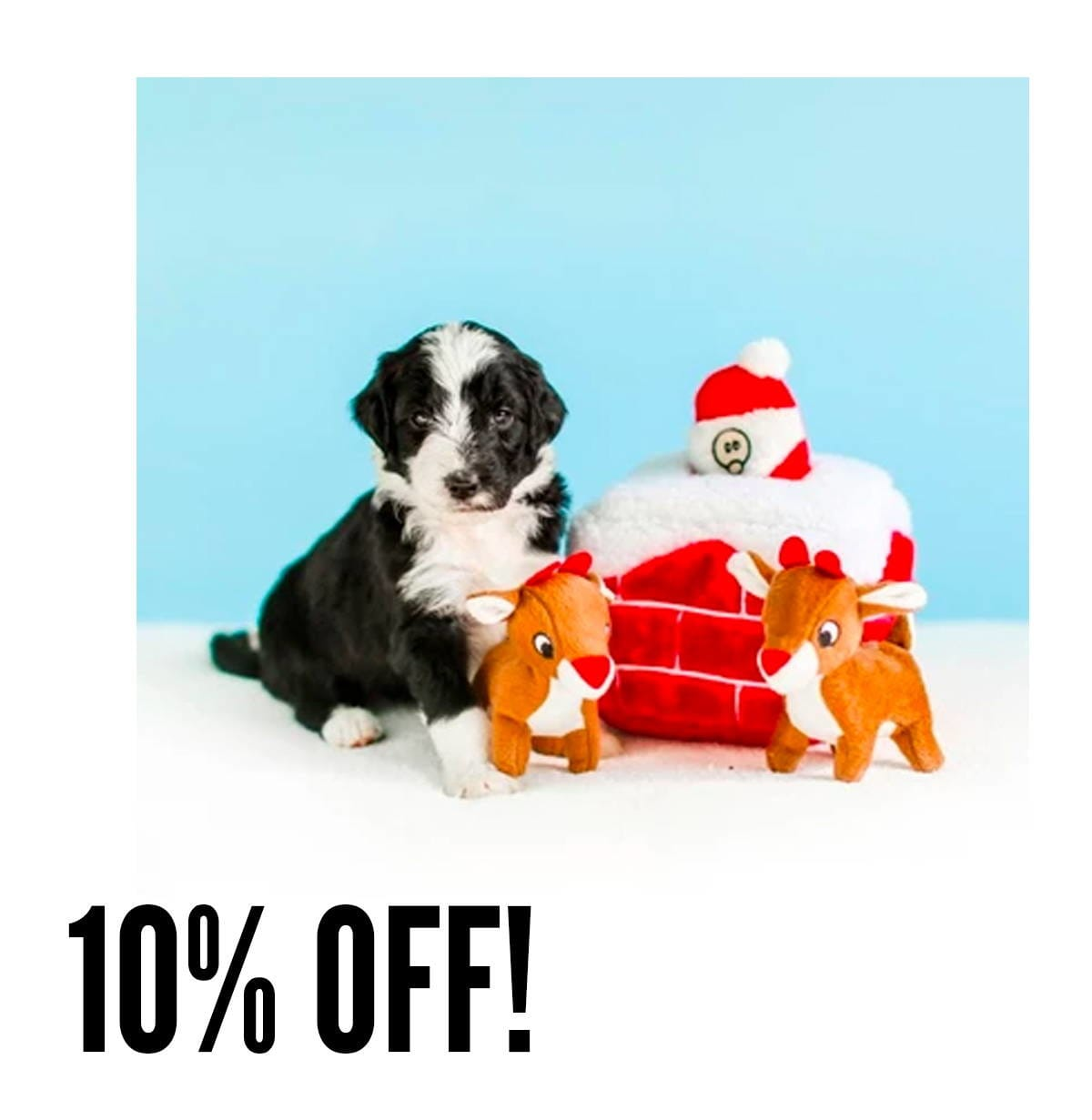 pawpy kisses black friday the grateful dog promotion