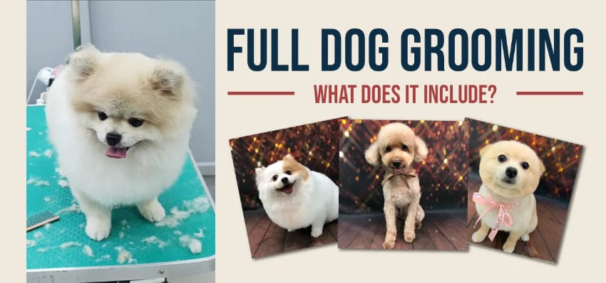 What full dog grooming services include in Singapore?