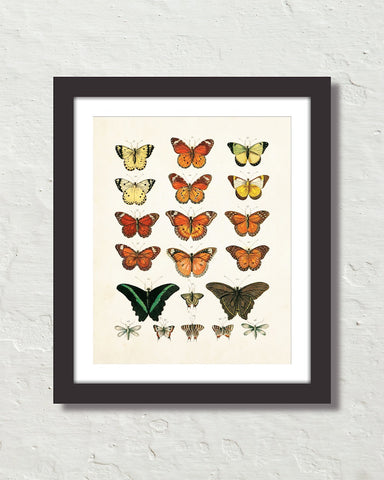 Vintage Butterfly Series Print No. 1