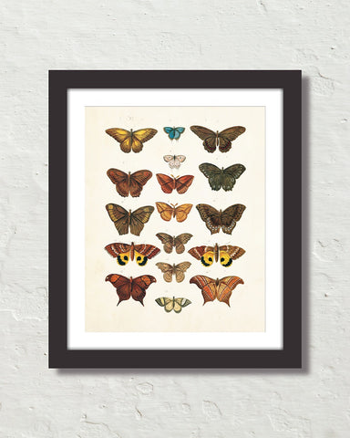 Vintage Butterfly Series Print No. 2