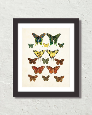 Vintage Butterfly Series Print No. 3
