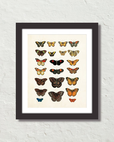 Vintage Butterfly Series Print No. 4