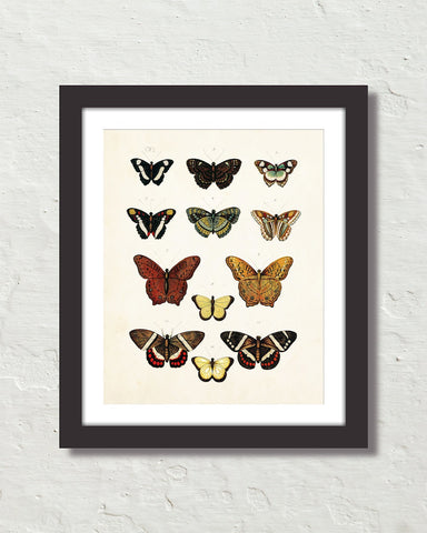 Vintage Butterfly Series Print No. 5