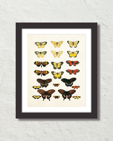 Vintage Butterfly Series Print No. 6