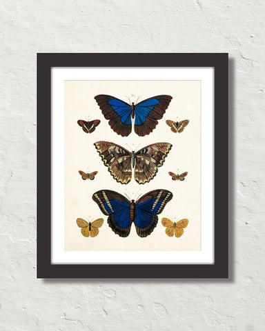 Vintage Butterfly Series Print No. 7
