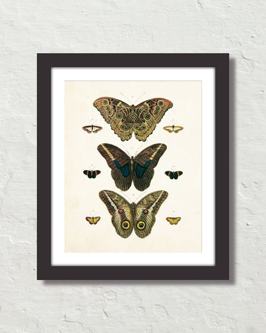 Vintage Butterfly Series Print No. 8