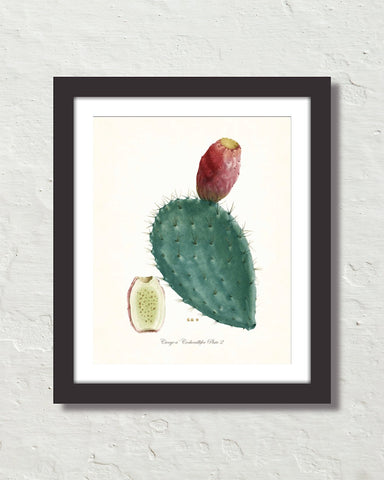 French Cactus Series No. 2 Botanical Art Print