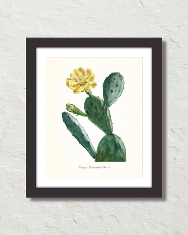 French Cactus Series No. 3 Botanical Art Print