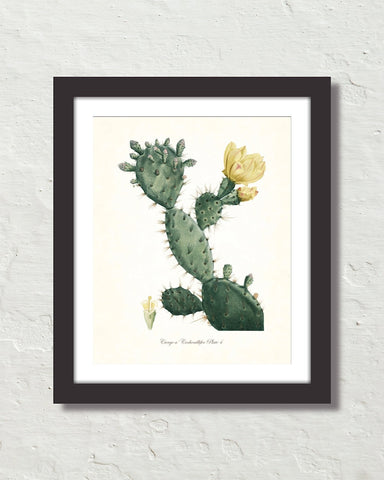 French Cactus Series No. 4 Botanical Art Print