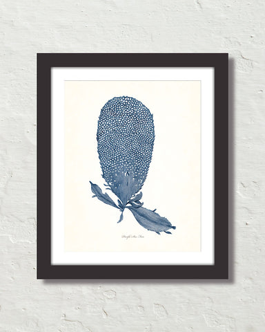 Vintage Indigo Blue Sea Fan No. 3 Print