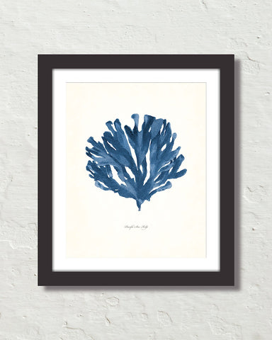 Vintage Indigo Blue Sea Kelp No. 5 Print