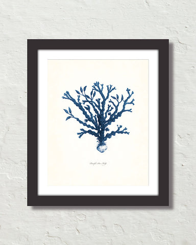 Vintage Indigo Blue Sea Kelp No. 6 Print