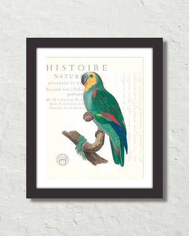 Vintage French Parrot Collage No. 10 Art Print