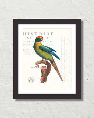 Vintage French Parrot Collage No. 20 Art Print
