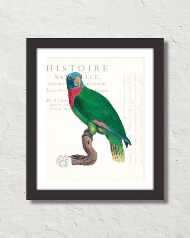 Vintage French Parrot Collage No. 30 Art Print