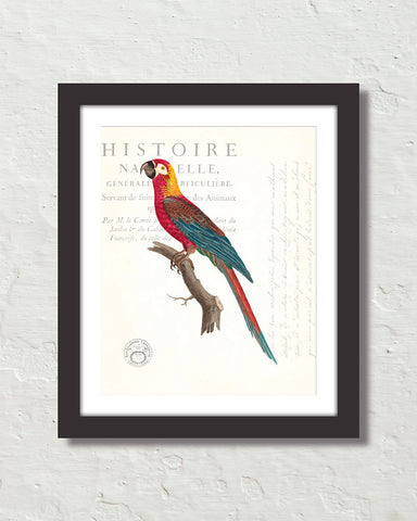 Vintage French Parrot Collage No. 40 Art Print