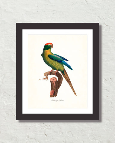 Vintage French Parrot No. 2 Art Print