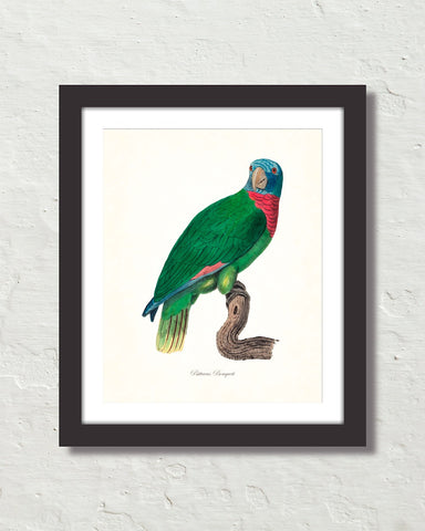 Vintage French Parrot No. 3 Art Print