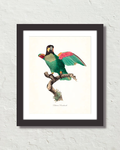Vintage French Parrot No. 5 Art Print
