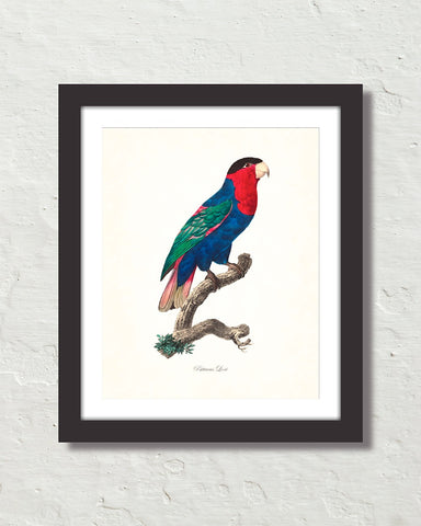 Vintage French Parrot No. 6 Art Print