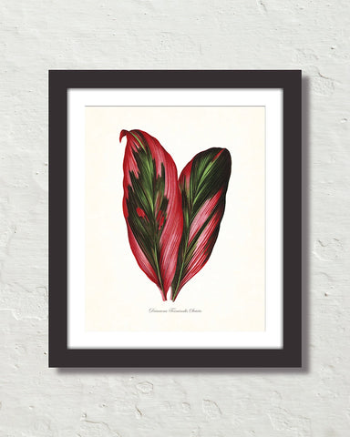 Vintage Tropical Leaf Dracaena No. 3 Botanical Print