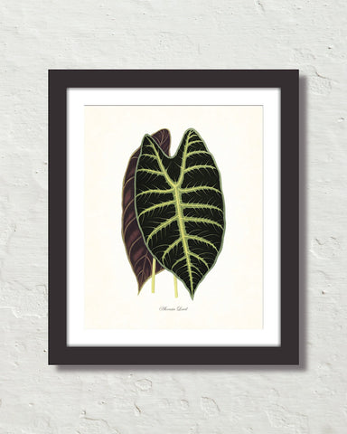 Vintage Tropical Leaf Alocasia No. 4 Botanical Print