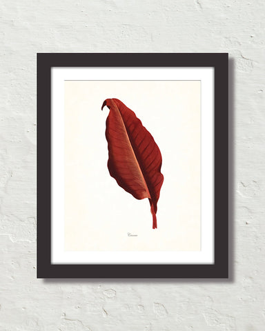 Vintage Tropical Leaf Canna No. 8 Botanical Print