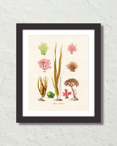 French Seaweed No. 35 Art Print