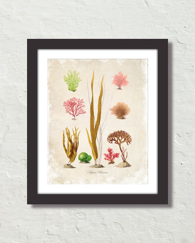 French Seaweed No. 32 Art Print