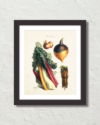 Antique French Vegetable No. 13 Botanical Print