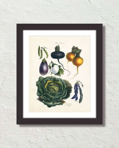 Antique French Vegetable No. 21 Botanical Print