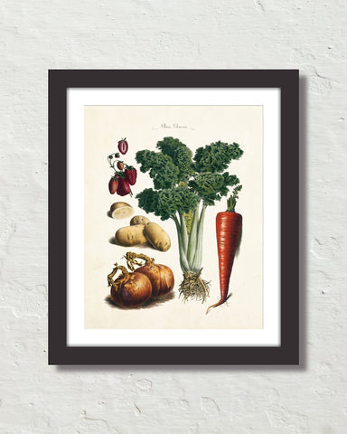 Antique French Vegetable No. 32 Botanical Print