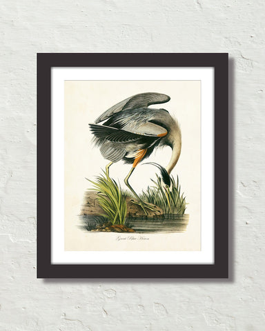 Vintage Audubon Great Blue Heron Bird Art Print