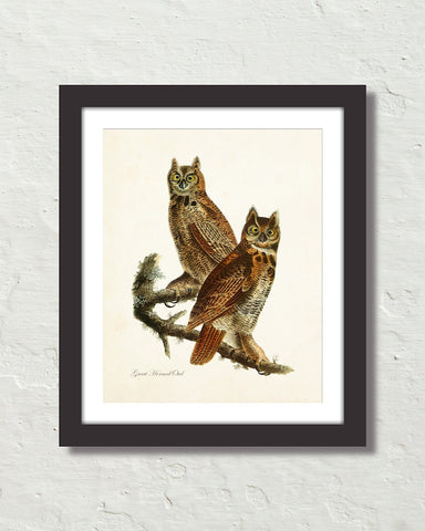 Vintage Audubon Great Horned Owl Bird Art Print