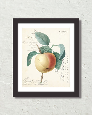 French Apple Collage Fruit Art Print