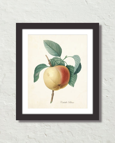 Vintage Apple Botanical Fruit Art Print