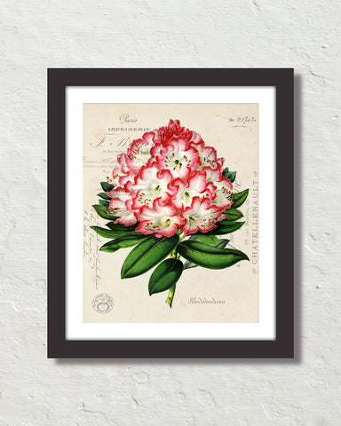 Antique Rhododendron Floral Collage Botanical Print