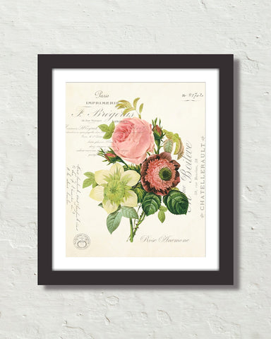 French Rose Anemone Collage Botanical Art Print