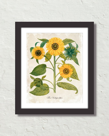 Antique French Style Sunflower No. 6 Art Print