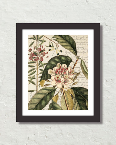 Botanical & Dragonfly Art Print
